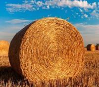 Как арендовать земельный участок у администрации сельского поселения