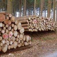 Определение незаконной вырубки леса