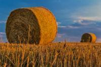 Для сельскохозяйственного производства строить дом 2020