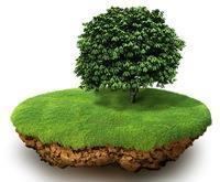 Как оформить землю в собственность если нет документов на