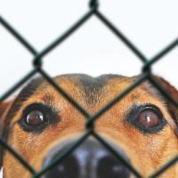 Ответственность хозяина собаки