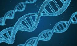 С какого года стало возможно генетическая экспертиза