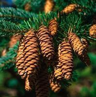 Оформить земли лесного фонда в собственность