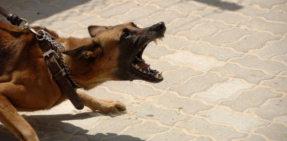 Каково наказание для владельца собак которые покусали моего отца