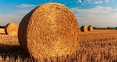 Как оформить земельный пай в собственность: особенности процедуры 2017